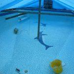 Swimming pool dolphin design