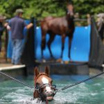 Horse in a pool